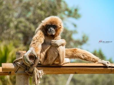 Zoo di Fasano